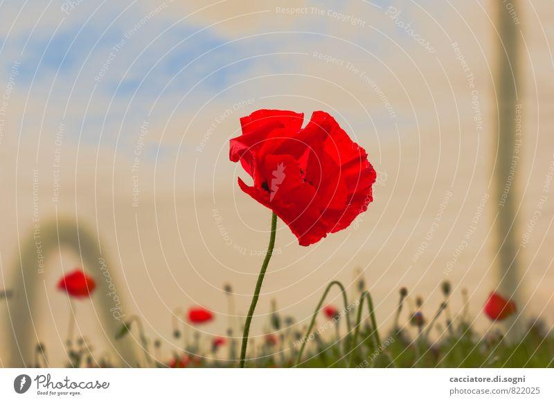 Mohnwiese Himmel Natur blau Pflanze schön grün Sommer rot Blume Landschaft Wiese Blüte träumen orange Idylle leuchten