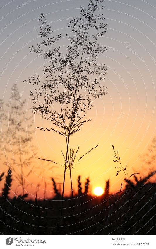 Sommerabend Himmel Natur Pflanze blau schön Sonne Landschaft rot ruhig schwarz gelb Wärme Gefühle Gras außergewöhnlich