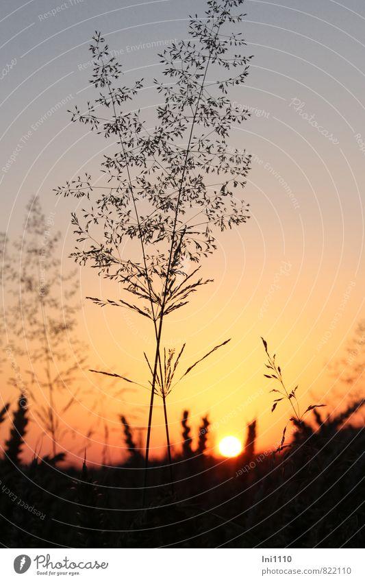 Sommerabend Landschaft Pflanze Himmel Sonne Sonnenaufgang Sonnenuntergang Sonnenlicht Wärme Gras Feld blau gelb orange rot schwarz Gefühle Stimmung