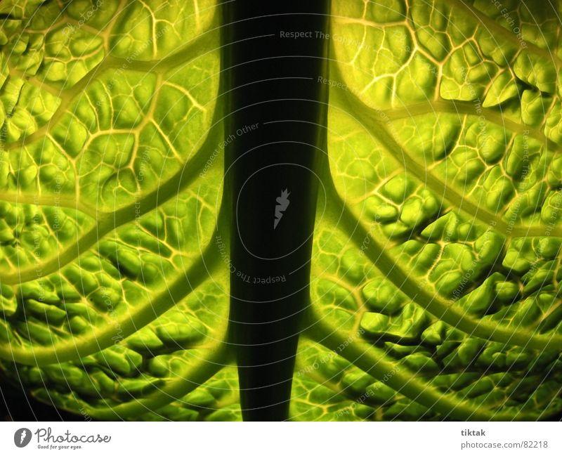 X-ray Wirsing Gemüsekohl Kohl Ernährung Vegetarische Ernährung Leben Pflanze grün frisch Gemüsegarten Eintopf Küche Geschmackssinn Wohlgefühl Vitamin Vitamin C