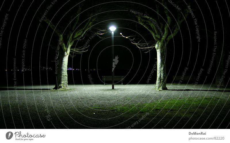 Verehrer des Lichts Natur Pflanze Baum Umwelt Beleuchtung Lampe Park Platz Kultur Romantik Straßenbeleuchtung Glaube Bank Laterne Partnerschaft