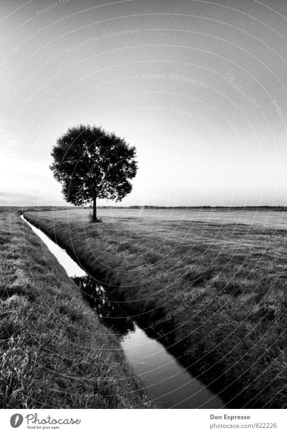 Im Umland Natur Pflanze Baum Landschaft ruhig Umwelt Wiese Feld Landwirtschaft Dorf Wolkenloser Himmel Straßengraben