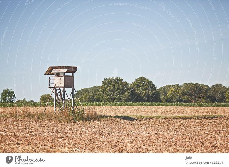 hochsitz Himmel Natur Pflanze Baum Landschaft natürlich Feld Sträucher einfach Bauwerk Grünpflanze Hochsitz