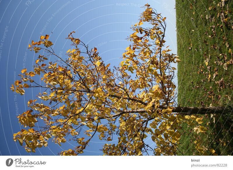 Herbst in Graz Bundesland Steiermark Baum Blatt gelb Verlauf Wiese Horizont grün Jahreszeiten Herbstbeginn Grünfläche Gras Steirische Toskana Blauer Himmel