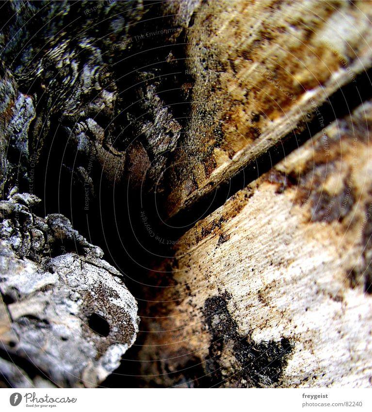Rinde mit Perspektive Baum schwarz grau braun Perspektive Baumstamm Baumrinde Nadelwald Waldwiese Baumstruktur