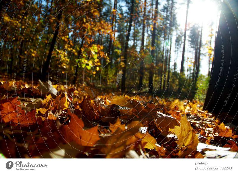 Arm und Reich Natur schön Baum Sonne Blatt Wald kalt Herbst Wärme Umwelt frisch ästhetisch Sträucher Physik Idylle Duft
