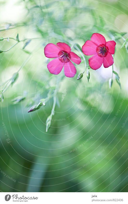 wiesenblumen Natur Pflanze Sommer Schönes Wetter Blume Blatt Blüte Wiese ästhetisch schön wild weich Farbfoto Außenaufnahme Menschenleer Textfreiraum unten Tag