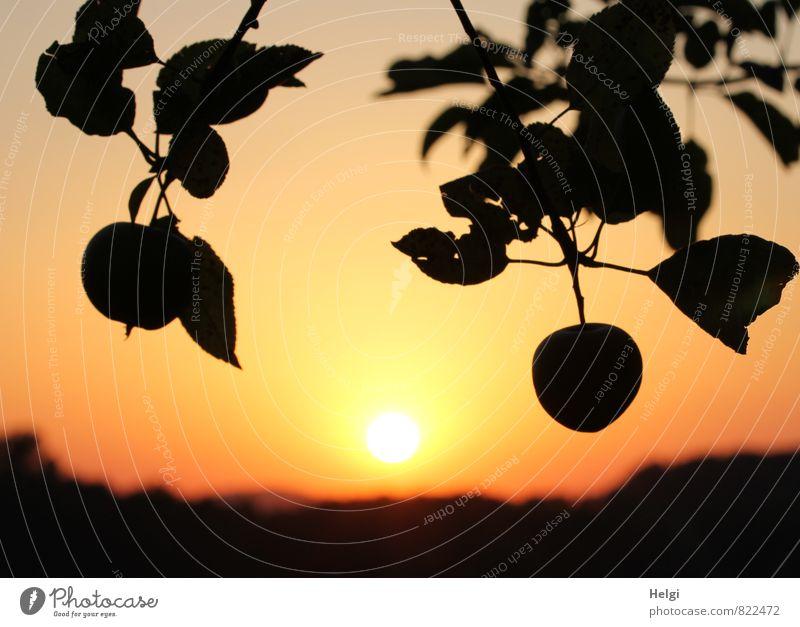 Verlockung | ...wie im Paradies... Lebensmittel Frucht Apfel Umwelt Natur Landschaft Pflanze Himmel Sonne Sonnenaufgang Sonnenuntergang Sommer Schönes Wetter