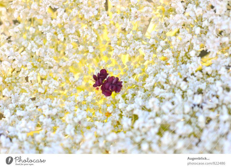 ein kleiner Schatz... Natur weiß Sommer rot gelb Wärme Wiese Liebe Blüte Glück Gesundheit braun Feld Zufriedenheit frei frisch