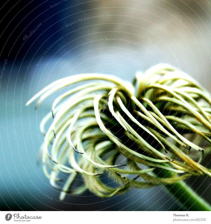 Pflanze von Rechts blau grün schön Pflanze Sonne Sommer Blume Wiese Wärme Gras Blüte glänzend Kreis weich Physik zart