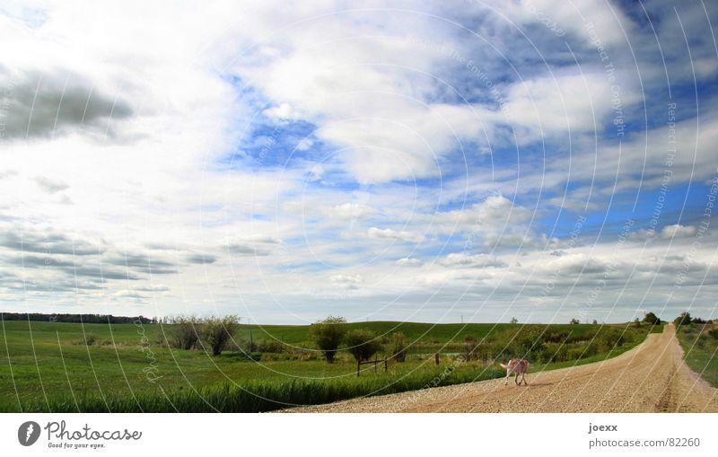 Der Weg ist das Ziel abgelegen gehen schlechtes Wetter Wolken bezogen Einsamkeit Unendlichkeit Ferne Gras grün himmelblau Langeweile Straßenbelag Hund