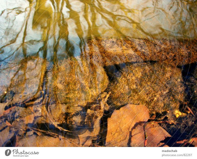 UNERREICHBAR FERN Himmel Natur blau grün Wasser Sonne Baum Landschaft Blatt Winter dunkel Wald kalt Umwelt Gefühle Herbst