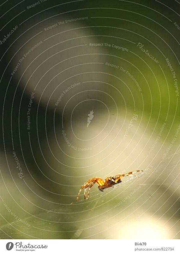 Wer jagt, muss warten können grün weiß Sommer ruhig Tier Garten braun orange Wildtier Sträucher warten gefährlich bedrohlich beobachten berühren Netz