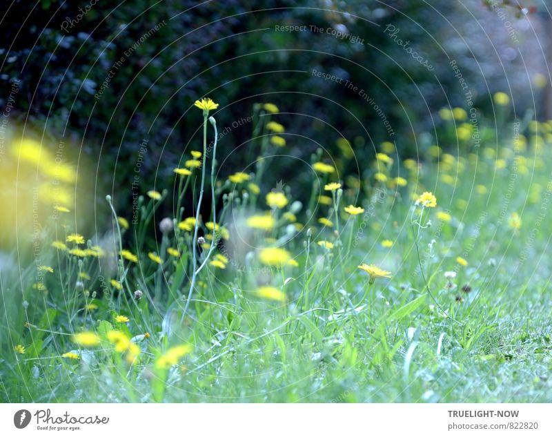 Randbeleuchtung Natur Pflanze schön grün Sommer Blume Landschaft schwarz gelb Leben Wiese Gras lustig natürlich klein Glück