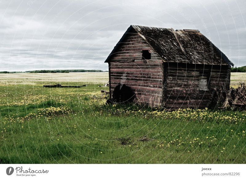 Außenstelle Einsturzgefahr Manitoba verrotten Wiese Feld Holz Verfall Bauernhof Dach Vergänglichkeit grau Kanada Fenster Landwirtschaft Einsamkeit resignieren