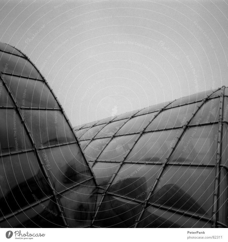 graz 3/03 (2) Glasbläser Haus schwarz Gebäude März Österreich Botanik Gewächshaus steil Quadrat Spiegel Reflexion & Spiegelung grau streben Fenster pflanzlich