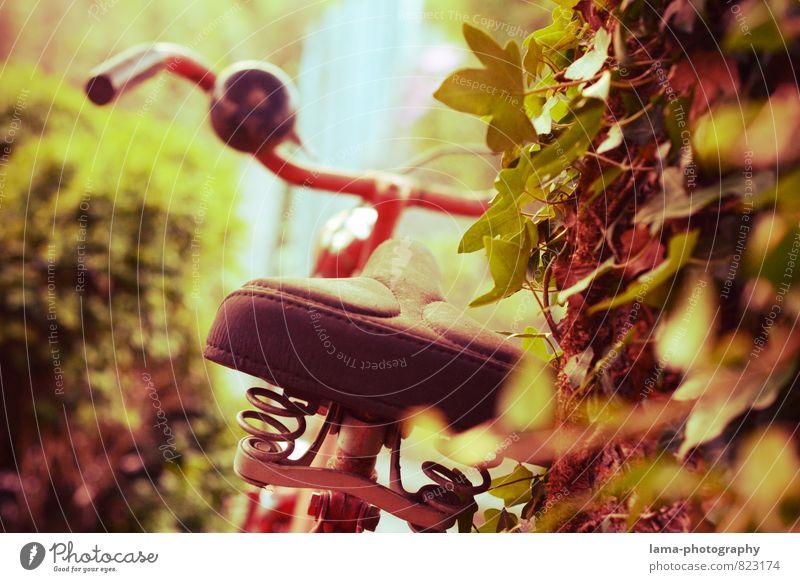 Ruhepause Ferien & Urlaub & Reisen alt Sommer Erholung rot Sport Park Freizeit & Hobby retro Pause Fahrradfahren Fahrradtour Metallfeder Efeu Fahrradklingel
