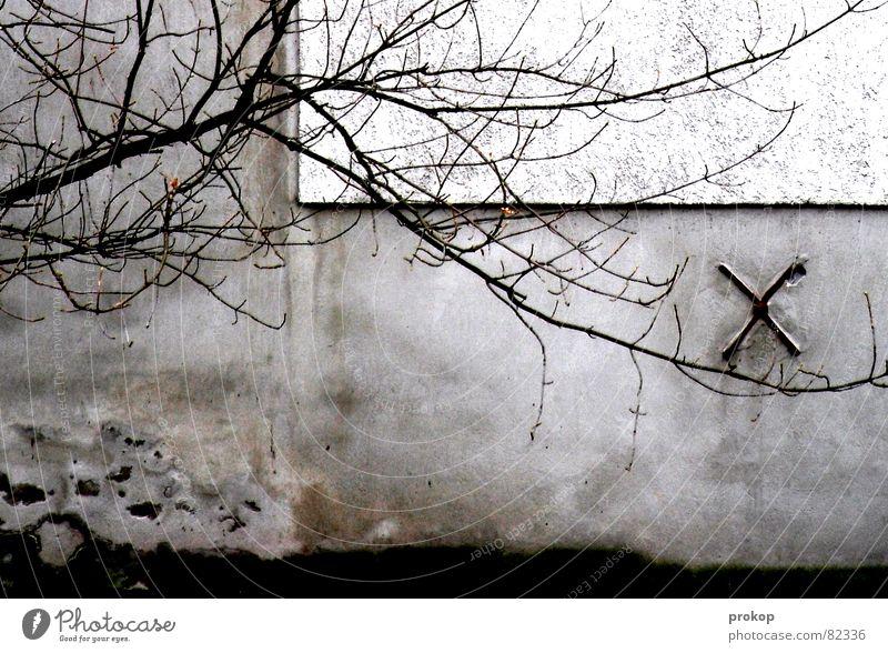 Hinterhofchoreographie Schwäche Baum Wand Mauer fein labil kaputt Trauer zerstören abrissreif Baumstruktur Konstruktion Verfall Detailaufnahme Vergänglichkeit