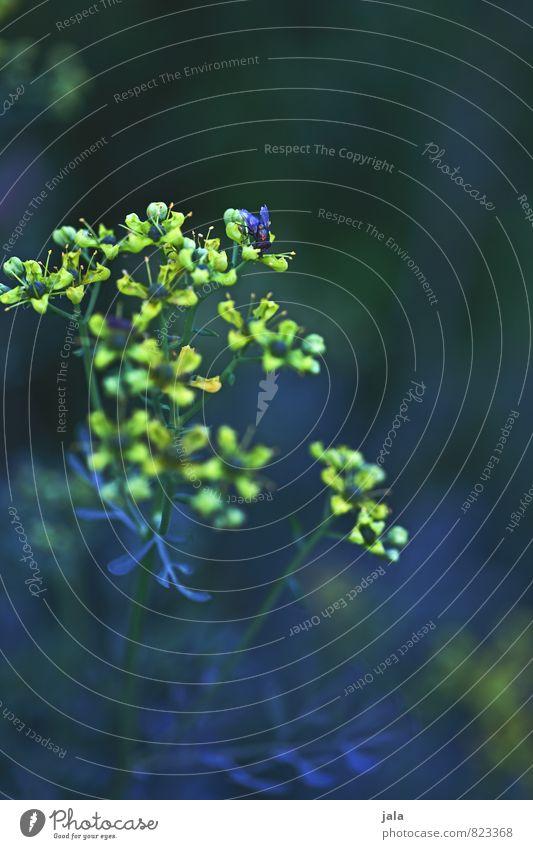 leuchtend Natur Pflanze Tier Blume Blüte Fliege ästhetisch schön Farbfoto Außenaufnahme Menschenleer Textfreiraum oben Abend Dämmerung