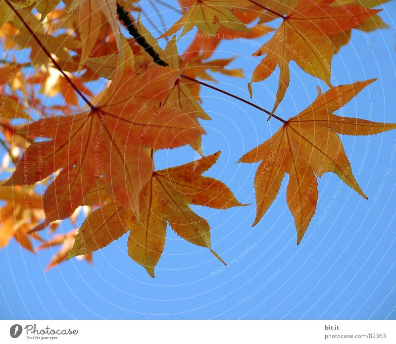 FÜR NEELZ Bruchlandung gebrochen Herbst Blatt leer Platz Pflanze Sammelstelle grün Bruchstück Sommer Naturphänomene Botanik Baum Regen dunkel Müllhalde Gras