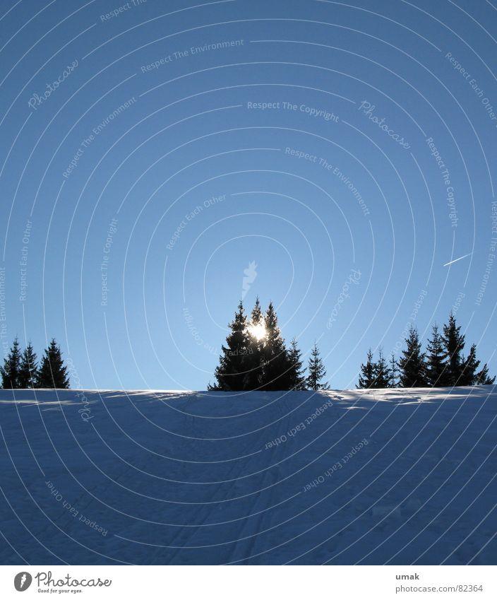 Ruhe Himmel blau Baum Sonne Winter ruhig kalt Schnee Horizont Eis Feste & Feiern Stern Flugzeug frisch Idylle Weihnachtsbaum