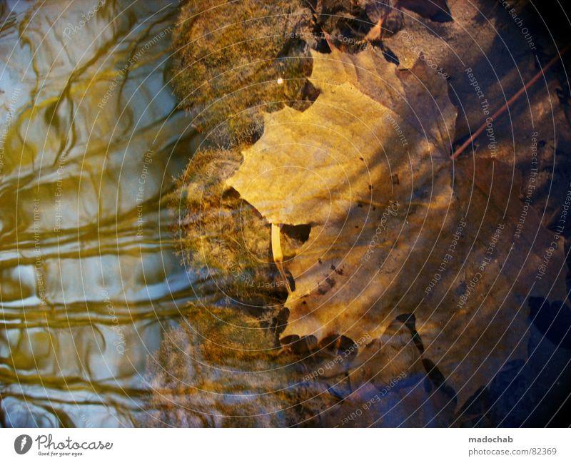 DOWN UNDER Natur blau grün Wasser Sonne Baum Landschaft Blatt Winter dunkel Wald kalt Umwelt Gefühle Herbst grau