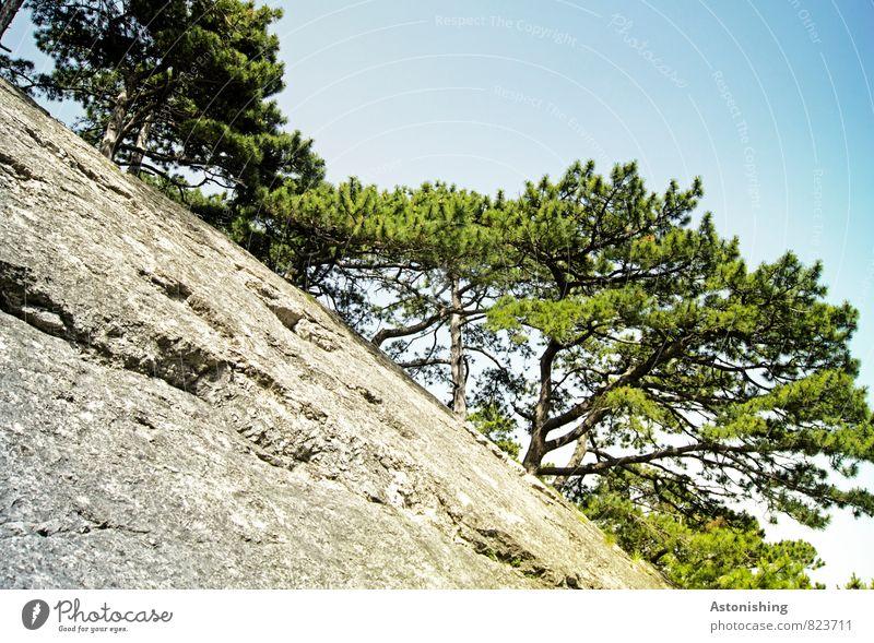 Stock und Stein Umwelt Natur Pflanze Luft Himmel Wolkenloser Himmel Sommer Wetter Schönes Wetter Wärme Baum Felsen Berge u. Gebirge hoch blau grau grün weiß