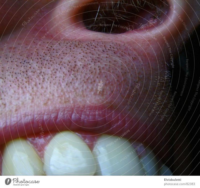 Loch und Beisser Nasenloch Zahnfleisch Zahnpflege Bart Nasenhaar Nüstern Zahnarzt Makroaufnahme Nahaufnahme Lippen kauleiste Zähne