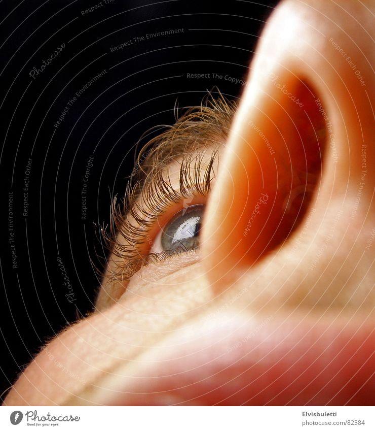 Nasenauge Gesicht Auge Nase Lippen nah Wange Nasenloch