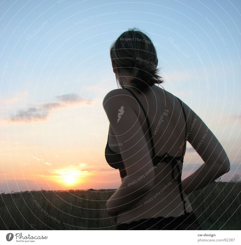 *turn around* bombig Hemd feminin edel Frau Stil Horizont Sonnenuntergang Feld Unterwäsche blond dunkel ruhig verführerisch Junge Frau attraktiv Dame dünn rund
