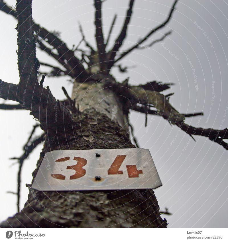 OPFER 34 Umweltverschmutzung Baum Waldsterben Umweltschutz Tod Skelett Ziffern & Zahlen keine Blätter Natur