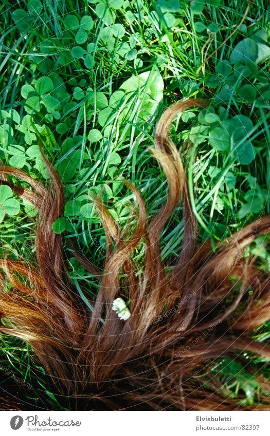 Haarrasen brünett Gras biegen Wiese grün braun Haarausfall Grasnarbe Grünfläche Rasen Weide