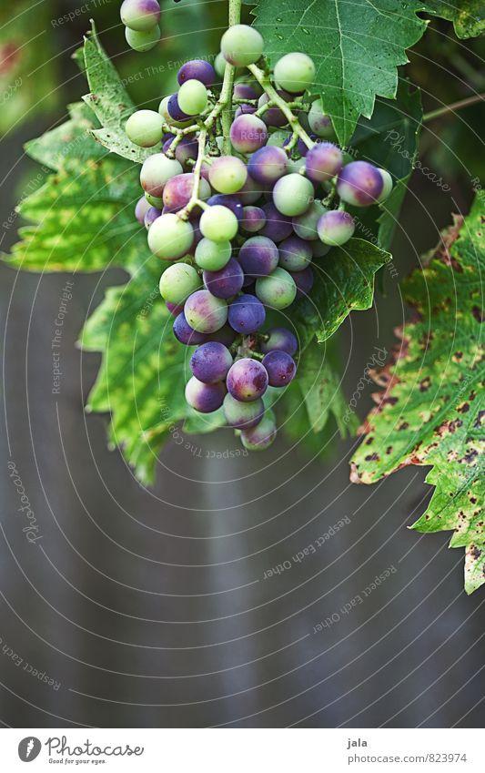 halbreif Pflanze Blatt natürlich Gesundheit Garten Wachstum Frucht frisch Wein lecker reif Nutzpflanze Weintrauben unreif