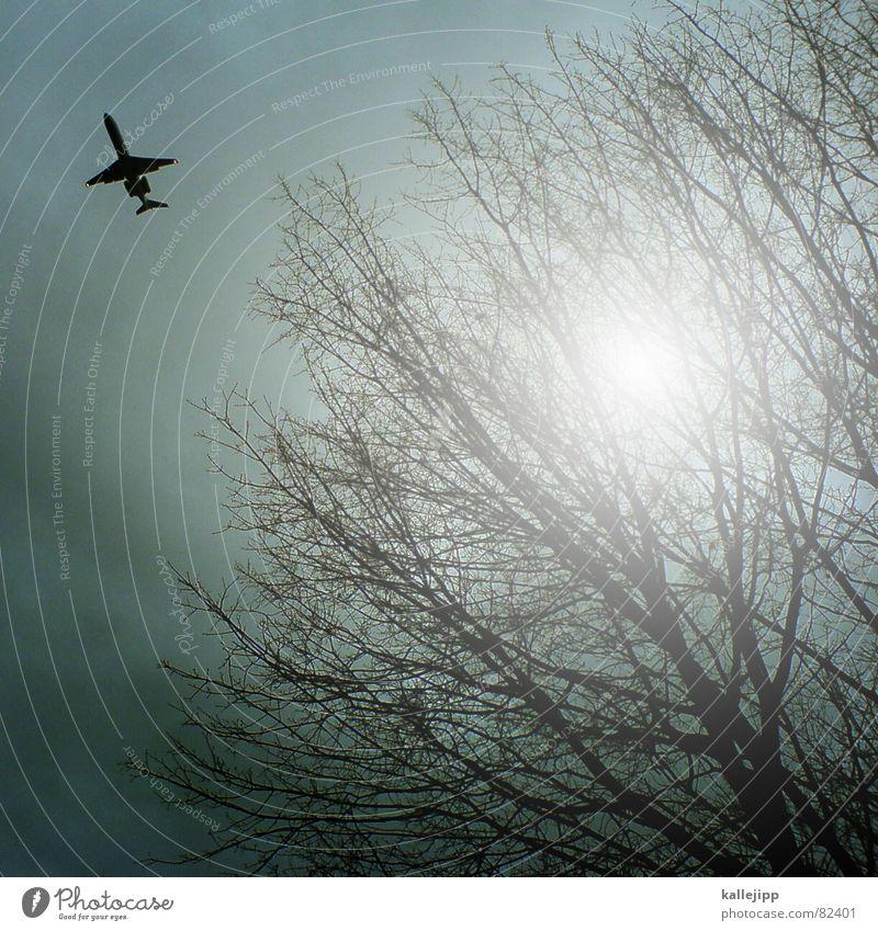 TXL Himmel Baum Sonne Wolken Luft Flugzeug Flughafen Maschine Flugzeuglandung Kiste Pilot Düsenflugzeug Flugplatz Fluggerät Passagierflugzeug Düsenjäger