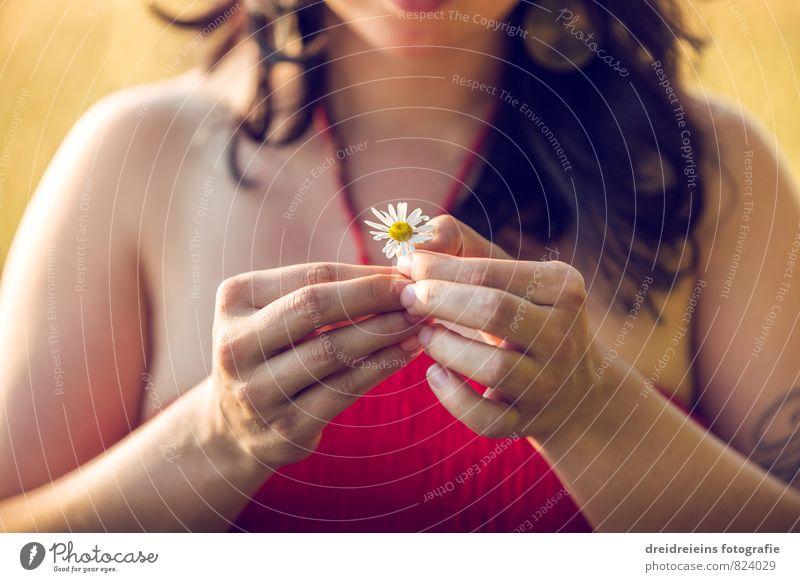 Eine Gänseblümchen Mensch Frau Natur Erholung Hand Blume Erwachsene Gefühle feminin natürlich Freiheit Zufriedenheit ästhetisch Finger berühren Vergänglichkeit