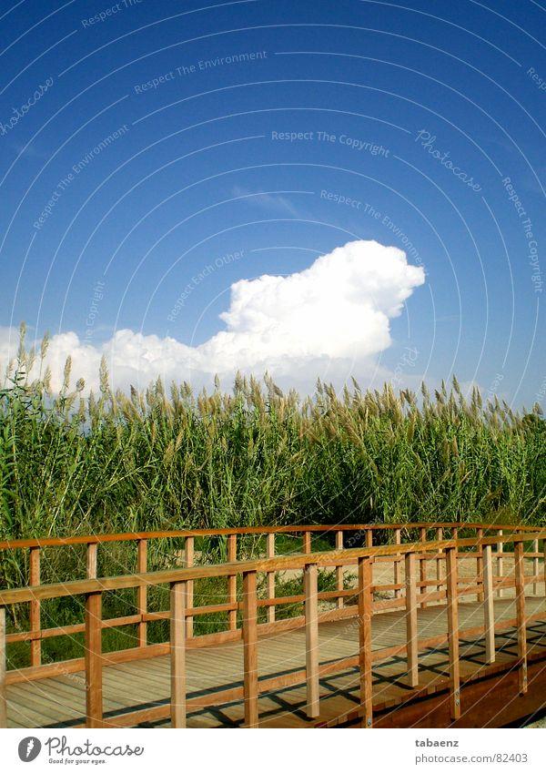 Brücke zur Natur Natur Himmel Ferien & Urlaub & Reisen Wolken Garten Park Brücke Freizeit & Hobby Spanien Schönes Wetter