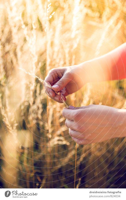 Feel the summer Natur Sommer Erholung Hand gelb Wärme Gefühle natürlich Stimmung orange Feld Zufriedenheit frei ästhetisch Schönes Wetter Finger
