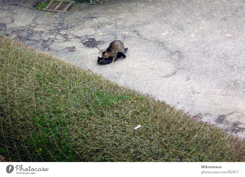 Frühlingsgefühle Katze Freude Tier Straße Geschwindigkeit Säugetier Hauskatze Hof Kuscheln Hecke Zuneigung Frühlingsgefühle