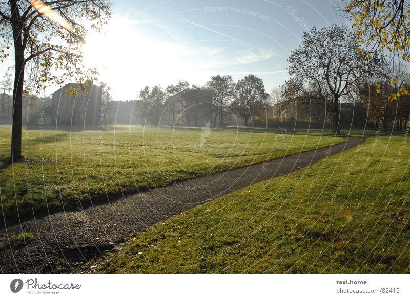 Morgens Park Ferne Tau Sonnenaufgang Baum Wiese Bürgersteig Nebel Herbst gehen Spaziergang Wegrand frisch angenehm Haus Gras Schleier Naturphänomene grün
