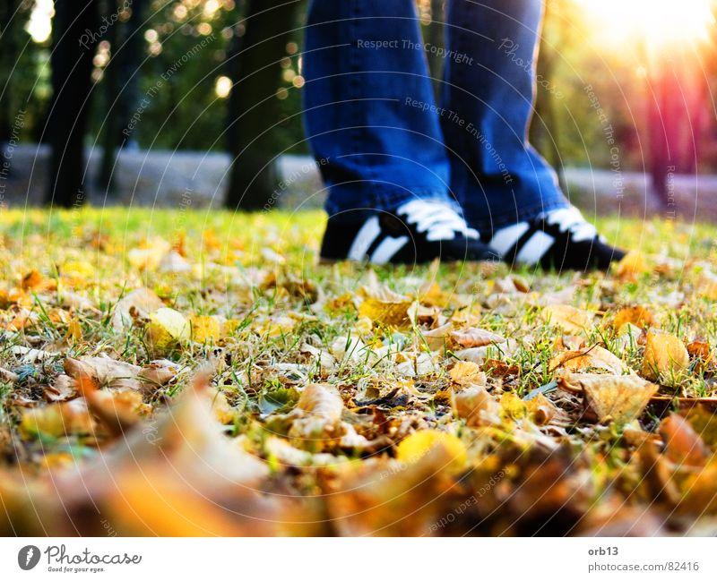 Let's go to walk Blatt Einsamkeit Herbst träumen Fuß Spaziergang Turnschuh