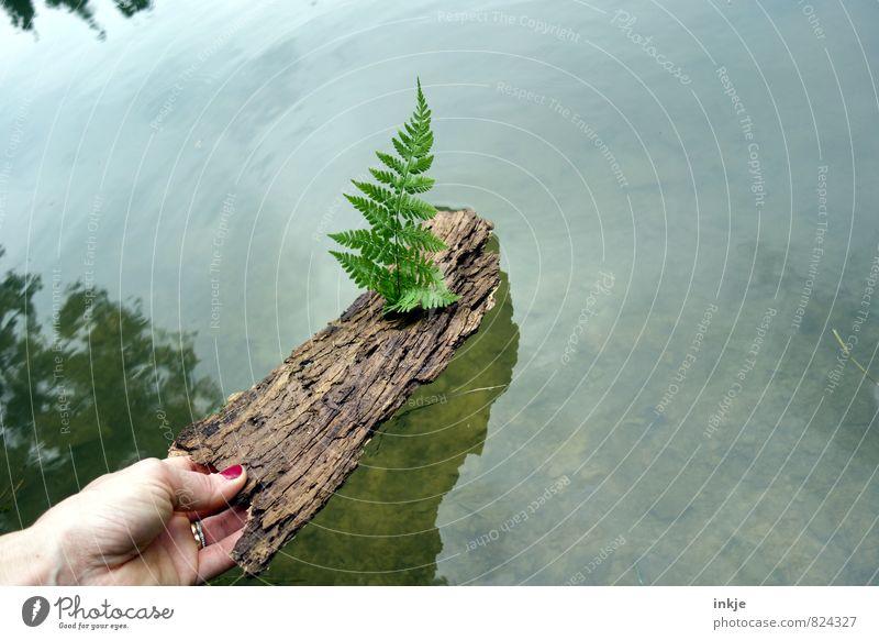 Schiffchen ahoi! Natur Ferien & Urlaub & Reisen Wasser Sommer Hand Blatt Freude Umwelt Gefühle Frühling Spielen natürlich Holz Schwimmen & Baden See