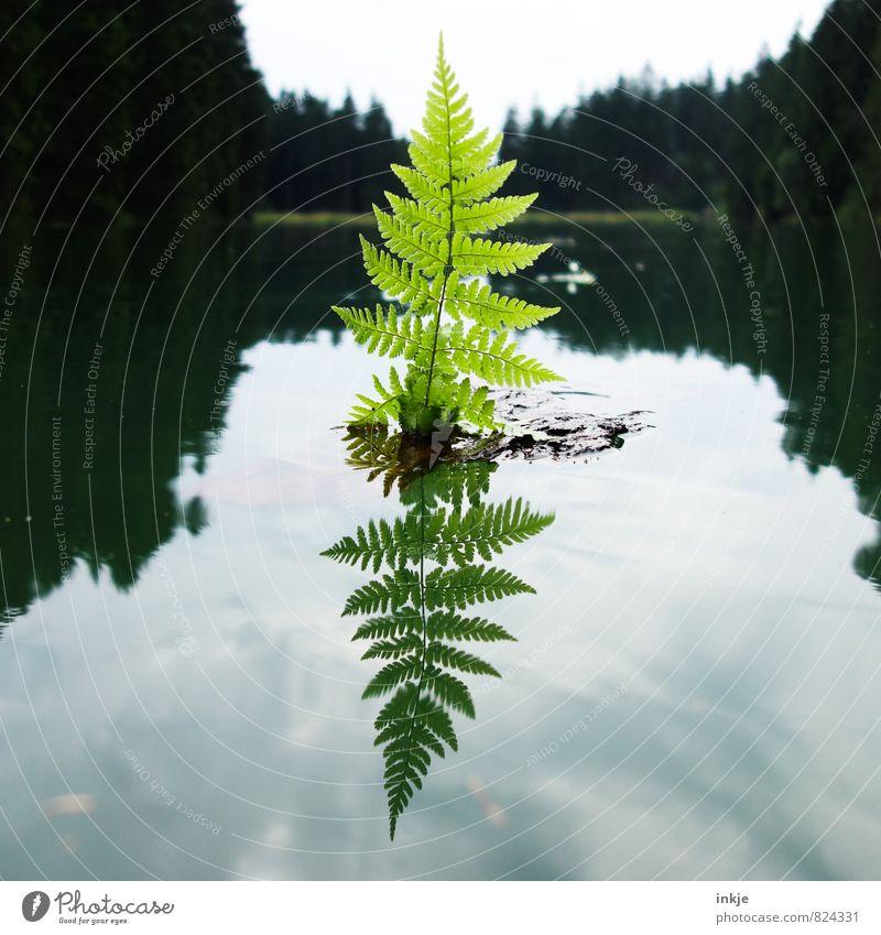 Segeln gehen Himmel Natur Ferien & Urlaub & Reisen Wasser Sommer ruhig Blatt Freude Wald Umwelt Spielen natürlich Holz Schwimmen & Baden See Wasserfahrzeug