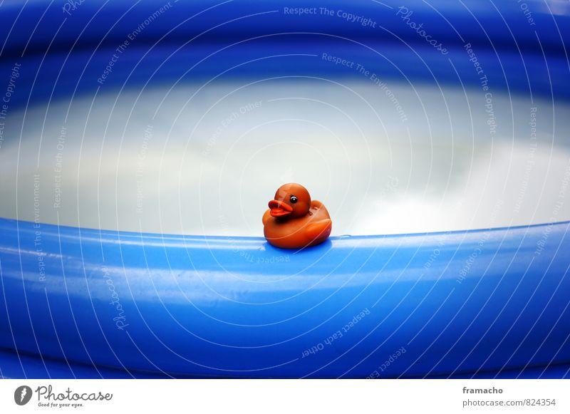 am pool blau Sommer Sonne Freude Tier Gefühle Spielen Schwimmen & Baden Glück Garten Stimmung Freizeit & Hobby orange Lifestyle Tourismus Fröhlichkeit