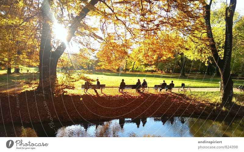 Herbststimmung Umwelt Natur Landschaft Wasser Sonne Sonnenlicht Wetter Schönes Wetter Baum Blatt Park Wald Flussufer Teich See Gefühle Stimmung Zufriedenheit