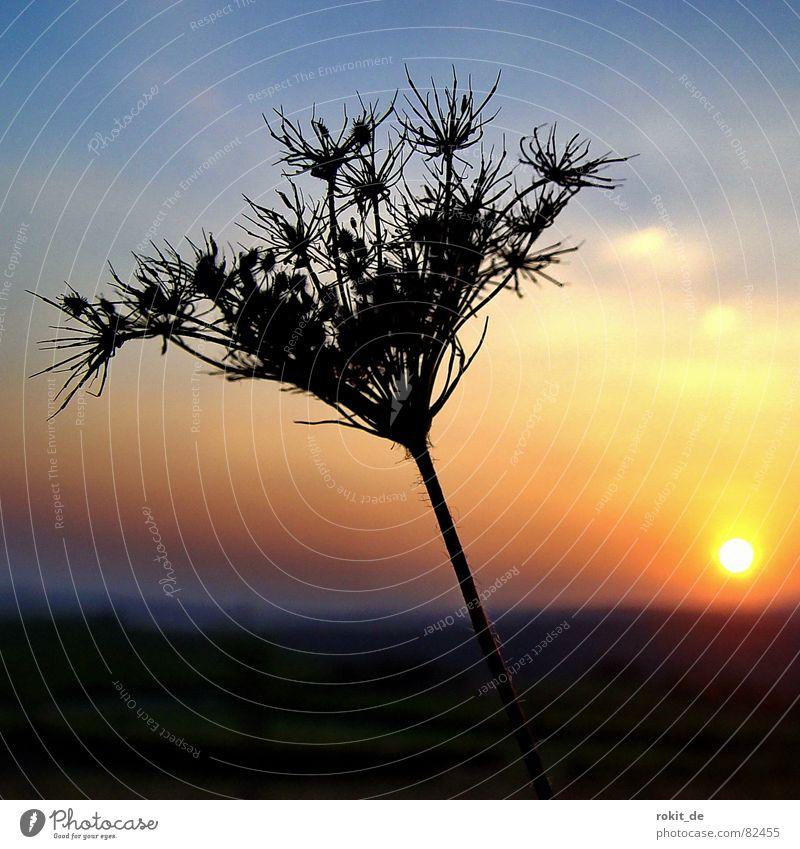 Gute Nacht Freund... verdorrt Sonnenuntergang trocken Horizont Abenddämmerung stachelig kalt Physik filigran Dämmerung Himmel Nachtruhe hart ruhig Sommer