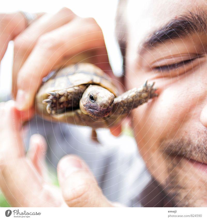 Streicheleinheit Mensch Jugendliche Tier 18-30 Jahre Junger Mann Gesicht Erwachsene Tierjunges außergewöhnlich maskulin Spitze Haustier Schildkröte