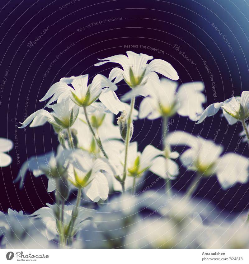 ::14-21:: Umwelt Natur Landschaft Pflanze Tier Frühling Sommer Klima Klimawandel Wetter Schönes Wetter Blume Blatt Blüte Garten Park Wiese Terrasse Lebensfreude