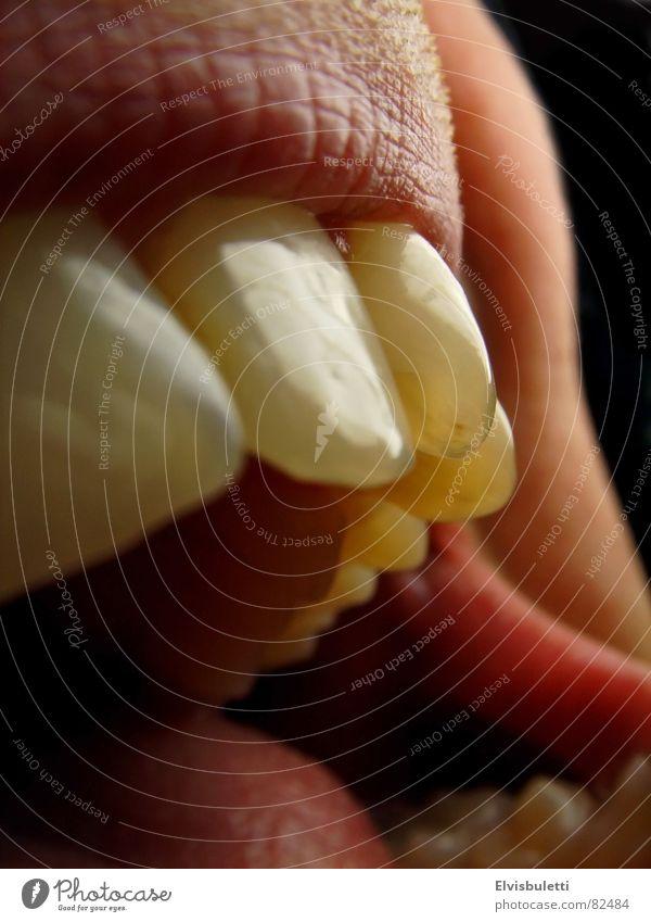 beissen! Schneidezahn schreien mündlich Ausruf Wut Ärger Appetit & Hunger Mund Lippen offen beißen den mund betreffend kauleiste mund...