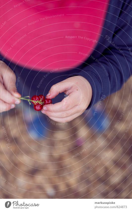 johannisbeeren mampf mampf Mensch Kind Pflanze Hand Gesunde Ernährung Leben Junge Spielen Essen Freizeit & Hobby Frucht Kindheit Arme genießen Finger
