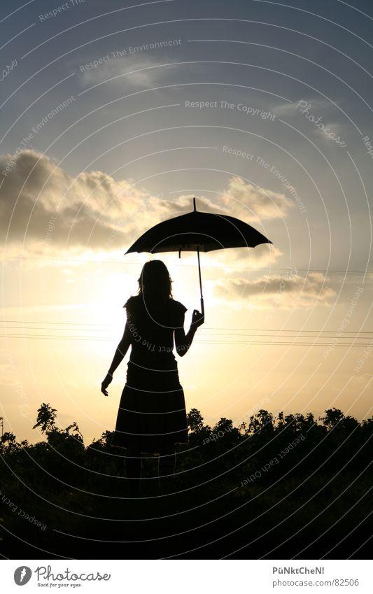 sonnenschirm Himmel Sonne Wolken Wiese Herbst Gras Feld Regenschirm
